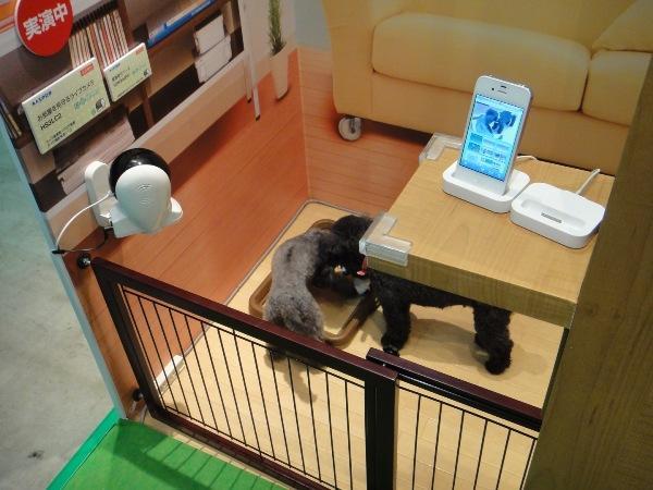 Домашняя камера наблюдения Maspro с дистанционным доступом