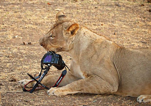 Съемка дикой природы или краш-тест Canon 5D Mark II