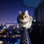 Ночная фотосъемка