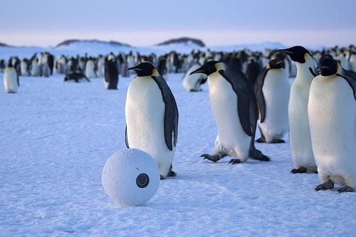 Жизнь обитателей Антарктики документалисты снимали с помощью роботов-операторов