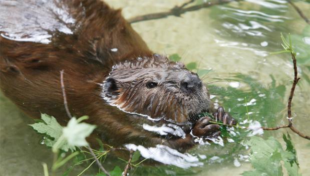 Фотосъёмка дикой природы сопряжена с немалым риском для фотографа, даже при съёмке, как кажется, безобидных зверей