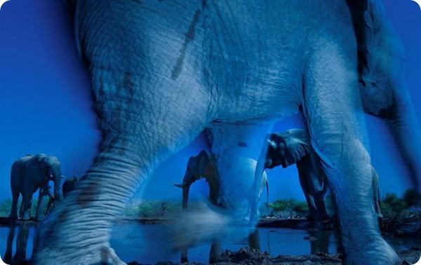 """Лондонский музей естествознания назвал победителей конкурса """"Лучший фотограф дикой природы 2013 года"""""""