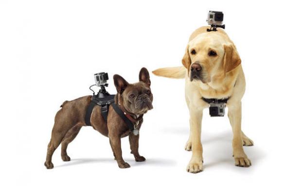 GoPro удивила своих поклонников выпуском нового уникального продукта — системы Fetch