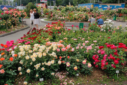 Розалий – украшение сада