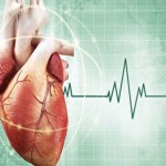 10 интересных фактов про сердце