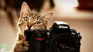 Как сэкономить на услугах фотографа