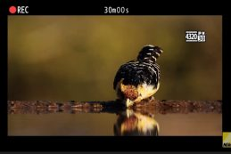 Nikon публикует второй тизер с Z 9
